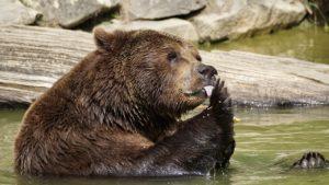 Bären beim Zelten: So entkam ich damals einem Bärenangriff