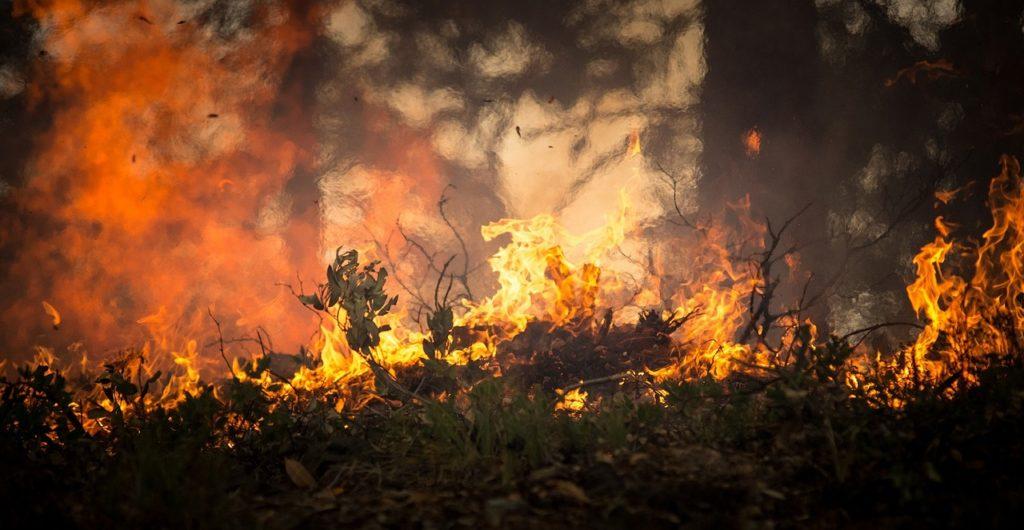 Lebensgefahren beim Zelten: Waldbrand und Feuer